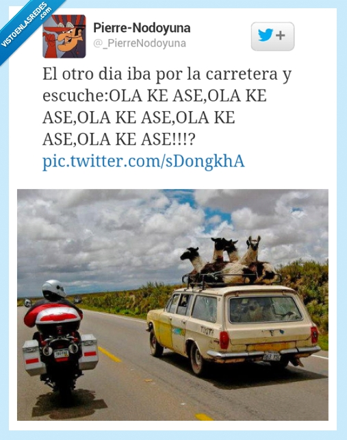 alpaca,carretera,coche,dise,ke ase,kiere,llama,ola