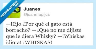 borracho,gato,whiskas,whisky