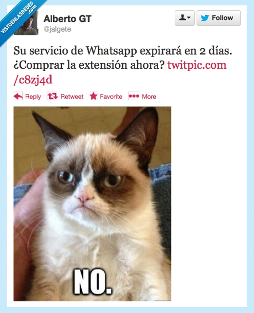 gato,gato gruñon,grumpy cat,mensaje,whatsapp