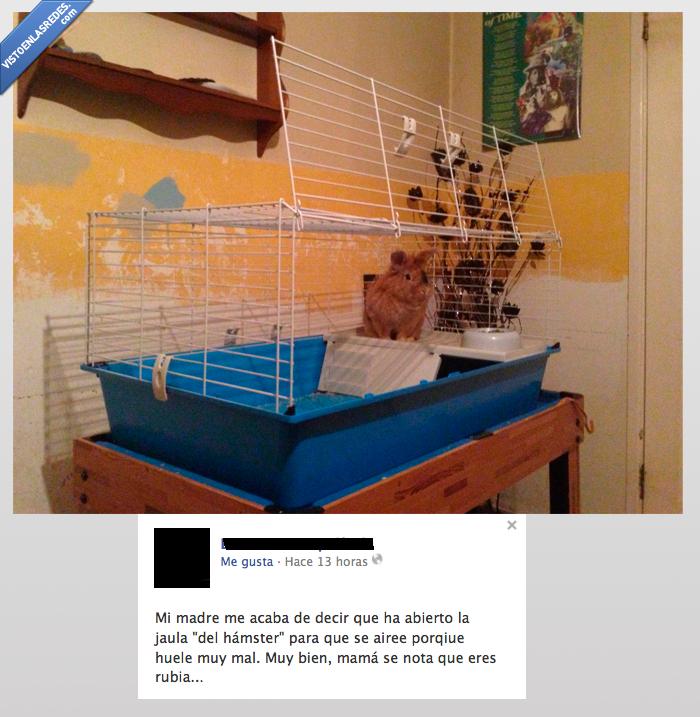 animal,cobaya,conejillo de indias,hamster,jaula,ventile