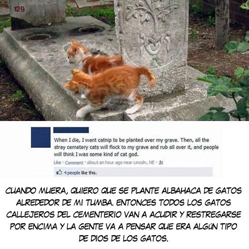 catnip,cementerio,gatos,restregarse,tumba