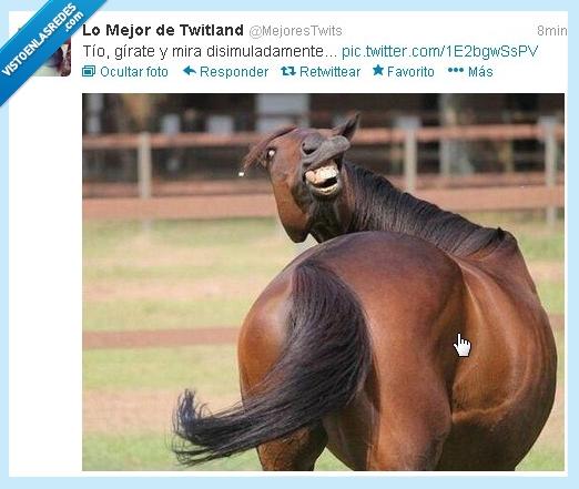 amigo,caballo,disimula,girar,mira,obvio