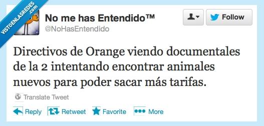 animal,moviles,Orange,smartphone,tarifa