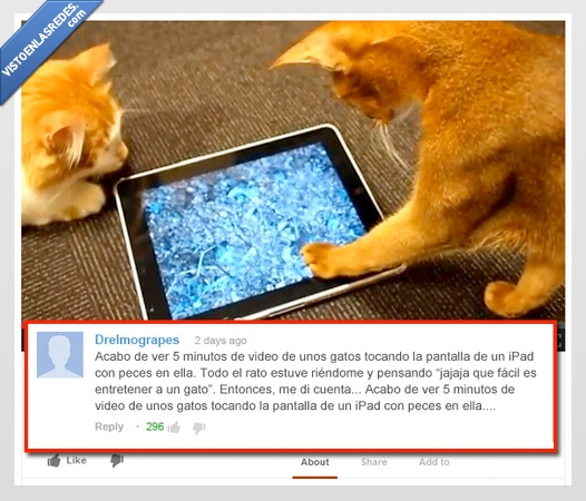 5 minutos,entretenerse,fácil,gatos,iPad,peces,vídeo,youtube