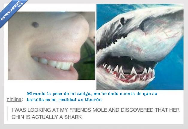 amiga,barbilla,boca,gira,peca,reves,tiburon