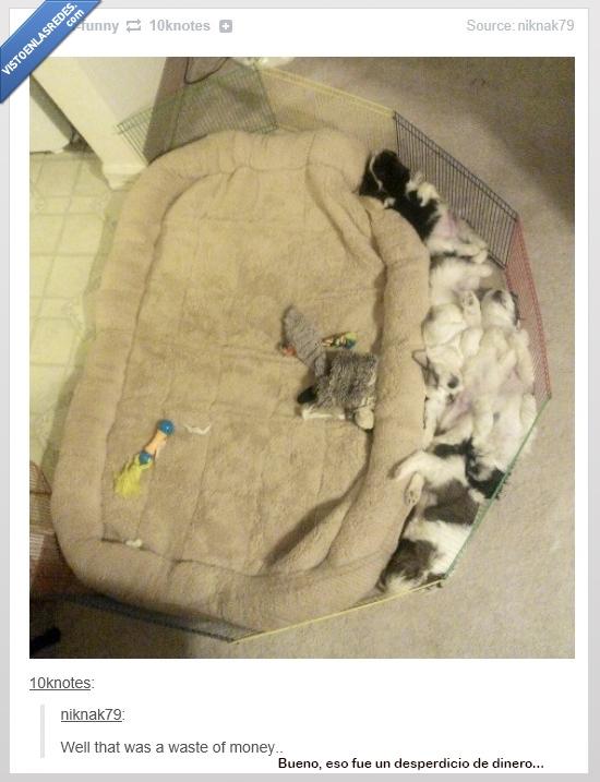 cama,colchón,desperdicio,dinero,hueco,mascotas,tumblr