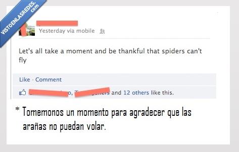 agradecer,araña,gracias,volar