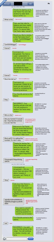 cat,facts,gatos,hechos,mensaje,molesto,movil,subscribir,whatsapp