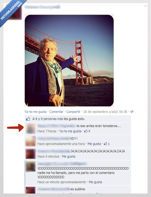 abuelo,campo,gandalf,golden gate,Ian McKellen,puente