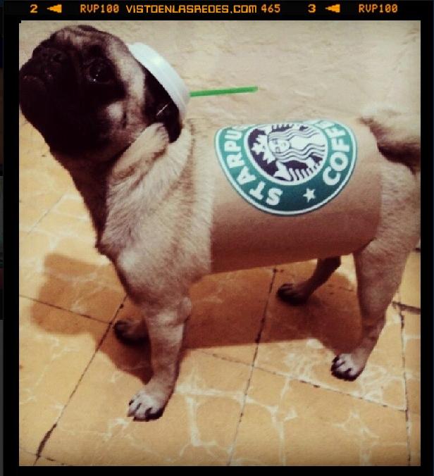 carlino,Hipster,Instagram,Pug,Starbucks,vaso