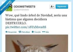 Enlace a La maldad hecha felino por @odiomistweets