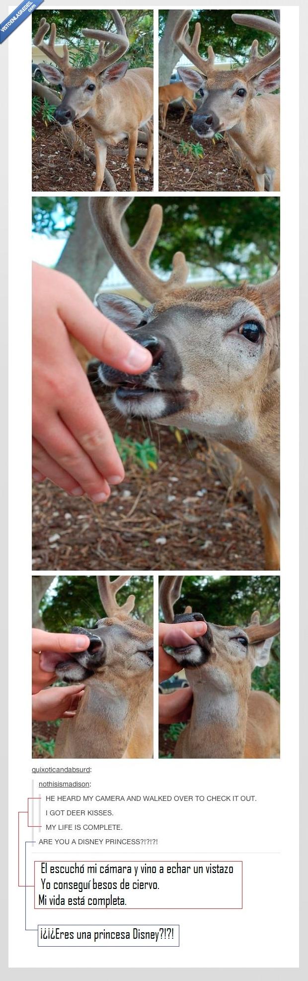besos,camara,ciervo,comer,disney,mano,princesa,tumblr