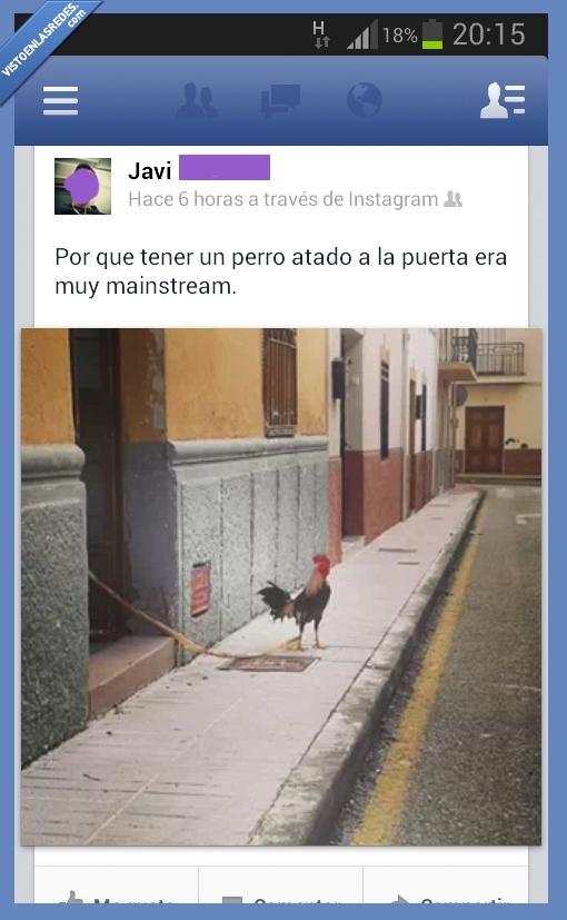 atado,atar,calle,casa,gallo,perro,pueblo,puerta