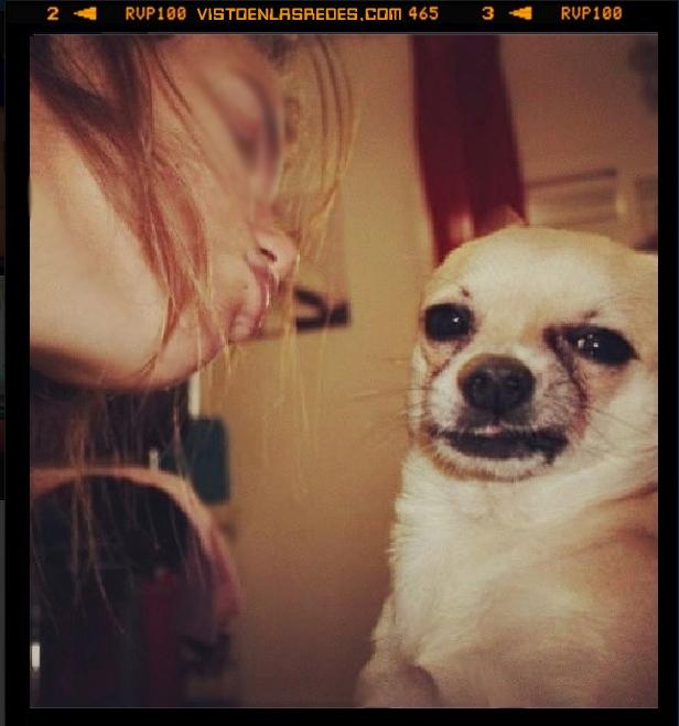 asco,beso,chica,chihuahua,instagram foto,mirada,morritos,no,perro