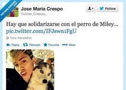 Enlace a La de cosas que habrá visto el pobre perrete por @Jose_Crespo_
