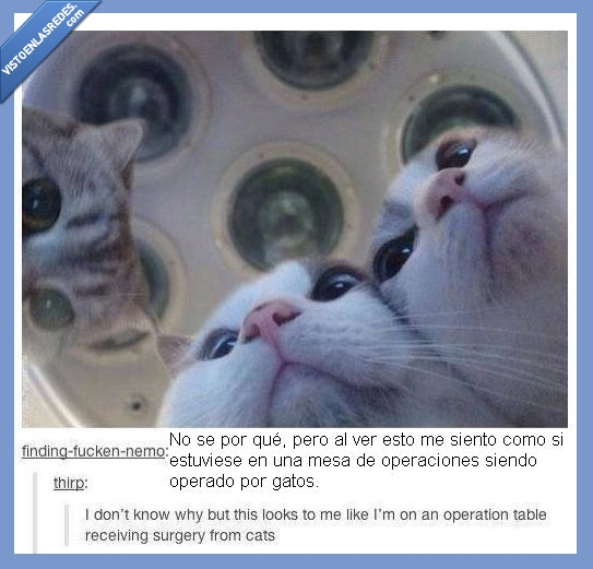 gaticos,gatos,imagen,la monda,mesa,operaciones,operar