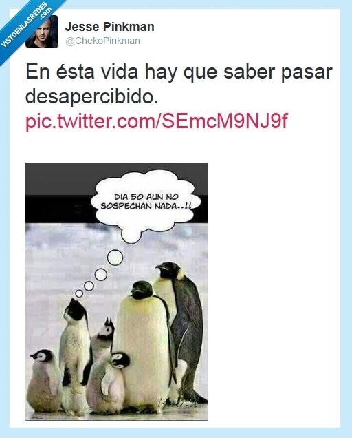 Desapercibido,disimular,Gato,Pinguino