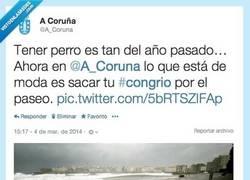 Enlace a En @a_coruna después de los temporales ya no tienen perros