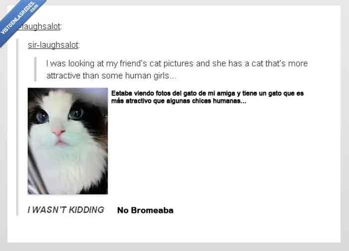 amiga,atractivo,bonito,fotos,gato,tumblr,¿gata?