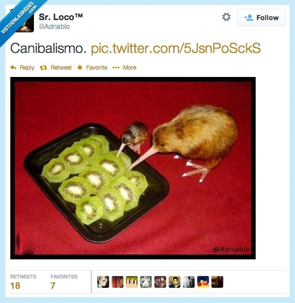386727 - Kiwis comiendo kiwis, que crueldad por @adriablo