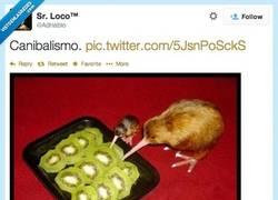 Enlace a Kiwis comiendo kiwis, que crueldad por @adriablo