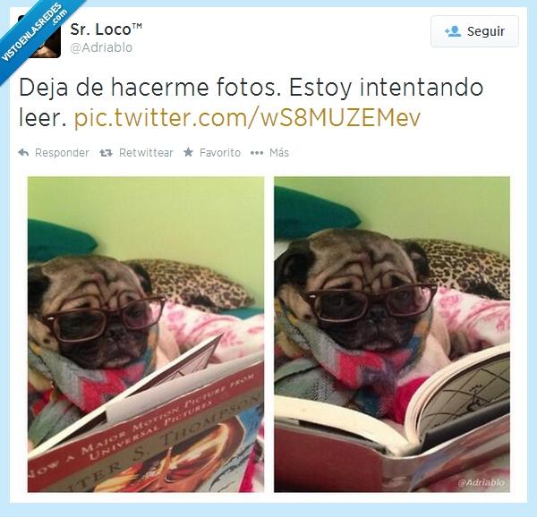 adriablo,deja,dejame,foto,fotos,gafas,intentando,leer,perro,pug,señor loco
