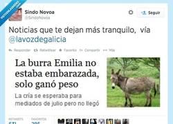 Enlace a El burro ya se había ido a por tabaco por @SindoNovoa