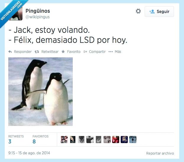 droga,Félix,Jack,LSD,Pingüinos,Rose,Titanic,Wikipingus