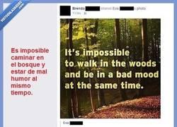 Enlace a No hay nada como un tranquilo paseo en otoño por un bosque...