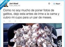 Enlace a ¿Quieres gatitos? Pues toma gatitos por @Javi_Abad_HC