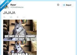 Enlace a ¿Y si se cae una suricata? por @ChicaDislexica