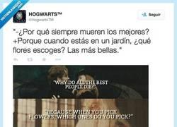 Enlace a Cuando lo piensas, da pena por @HogwartsTM