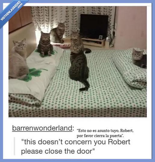 actitud,barrenwonderland,culto,gatos,miedo,reunión,Robert,susto,Tumblr