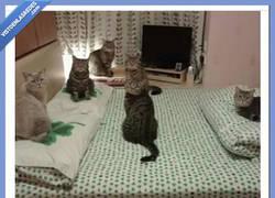 Enlace a La actitud de estos gatos asusta