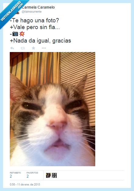 cara,ciego,fail,feo,flash,fotografía,gato,gracias,ojos