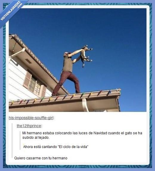 cantar,Circle of Life,El Ciclo de la Vida,gato,Rey León,tejado,Tumblr