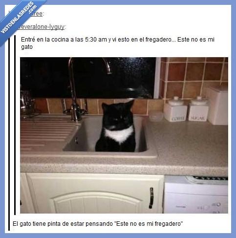 cocina,confuso,fregadero,gato,Tumblr,¿qué hago yo aquí?