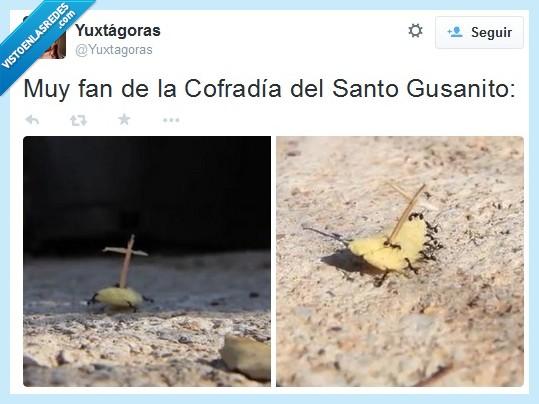 cofradía,costaleros,epic,fan,gusanito,hormigas,santo,Semana Santa