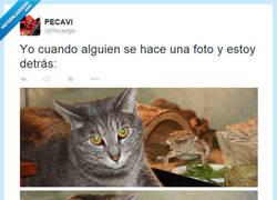Enlace a Como photobomber no tengo precio por @Pecavigo