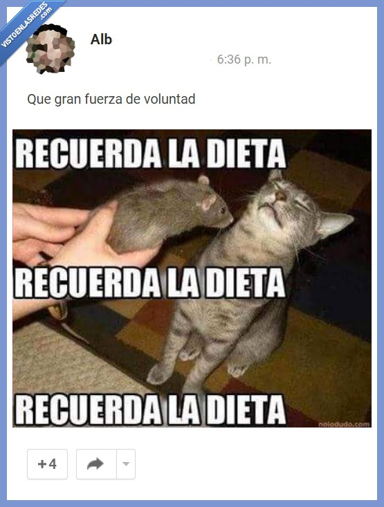 comer,dieta,fuerza,gato,rata,raton,recordar,recuerda,voluntad