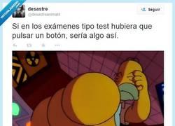 Enlace a Pito pito... por @desastreanimal4