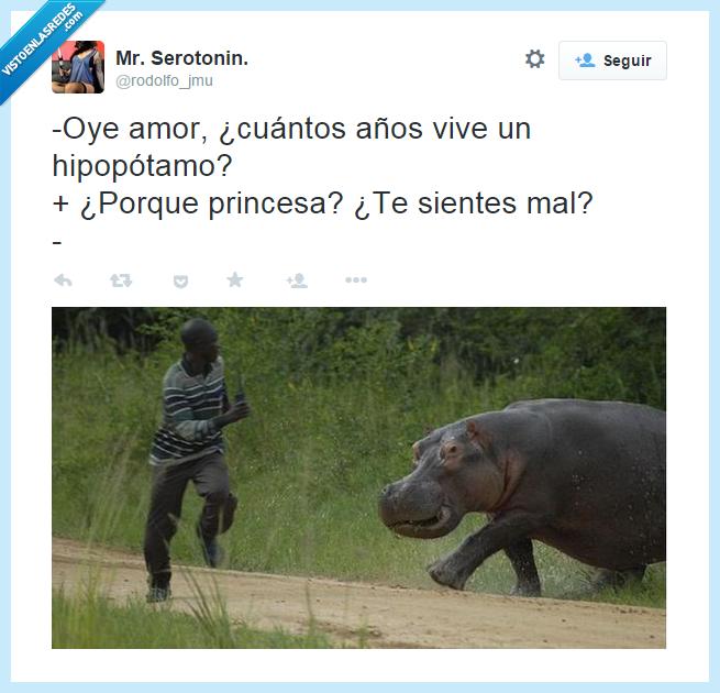 amor,animal,años,correr,gorda,hipopótamo,joven,negro,novia,peligro,perseguir,sofá