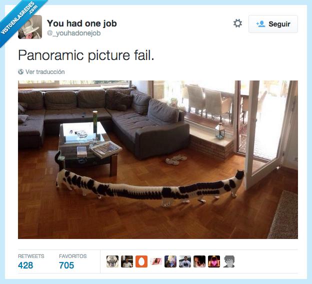 ciempiés,fail,foto,gato,largo,mal rollito,panoramic,panorámica,picture
