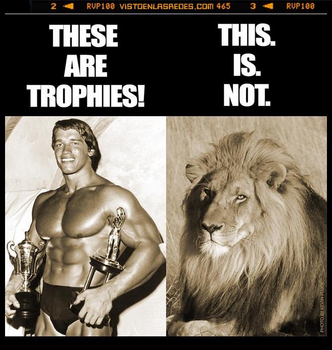 Cecil,joven,leon,premio,trofeo