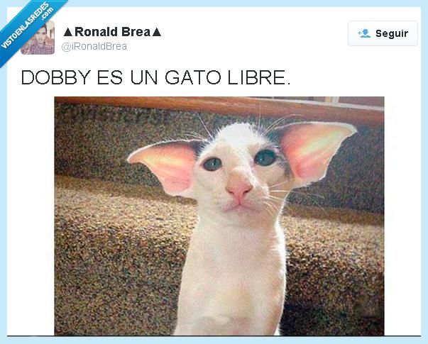 Dobby,gato,Harry Potter,parecido