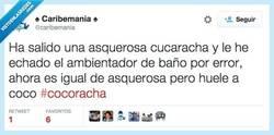 Enlace a La Cocoracha, la Cocoraaaacha... por @caribemania