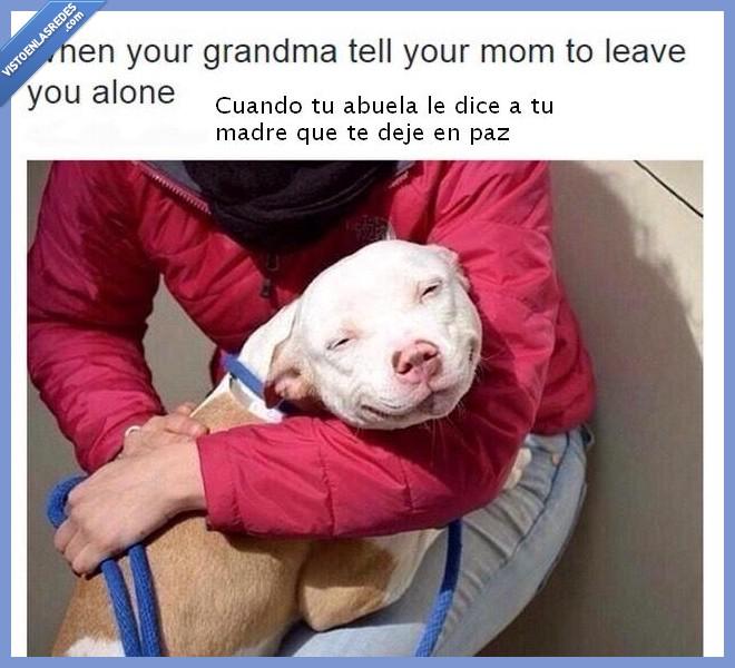abuela,cara,chincha rabiña,madre,perro,restregárselo,satisfacción,Tumblr