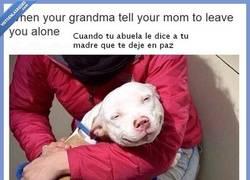 Enlace a Cuando tu abuela le dice a tu madre que te deje en paz