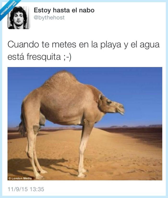 agua fresquita,camello,chepa,cuello,playa