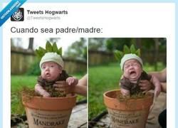 Enlace a La Generación Harry Potter ha comenzado a tener niños por @TweetsHogwarts